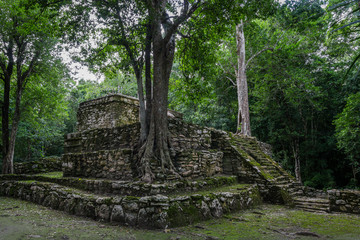 Old trees growing on ancient Maya temple complex in Muil Chunyaxche, Mexico