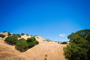 Golden Oak Tree Hillside
