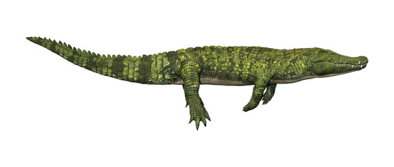 3D Rendering Green Crocodile on White