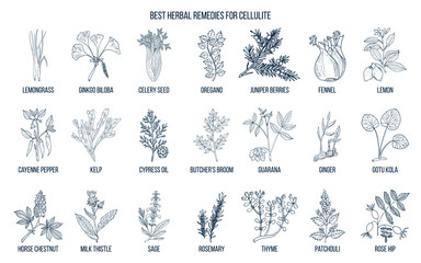 Collection of best herbs for cellulite