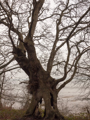big dark bare branch tree autumn overcast moody death