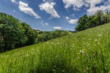 frisches gras auf einem berg
