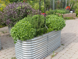 Metal Planter with herbs