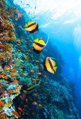 Photo of coral colony.