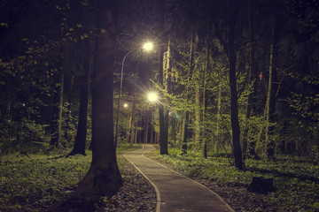 Trees in woodland park with lights at dark night. Landscape of night spring green park in city. Path in green forest with lanterns in the park.