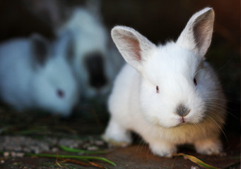 Rabbits.