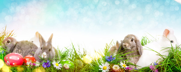 Frühling Banner Hasen Ostern