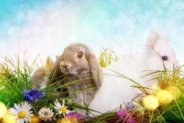 Hasen Wiese Ostern