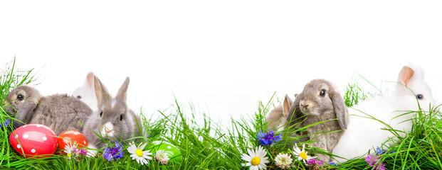 Freisteller Osterwiese Hasen Ostern Osterhase Eier auf Wiese
