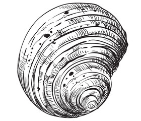 Hand drawing seashell-9