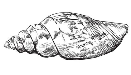 Hand drawing seashell-3