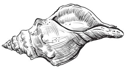 Hand drawing seashell-10