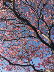 Beautiful blooming tree with pink flowers