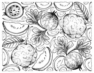 Hand Drawn Background of Guava and Indian Gooseberry