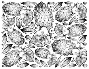 Hand Drawn Background of Horned Melon or Kiwano