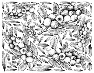 Hand Drawn Background of Ripe Blueberry Fruits