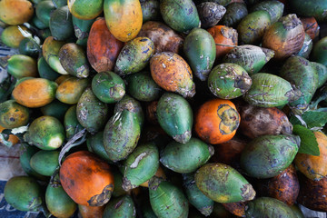 The areca nut is the seed of the areca palm (Areca catechu), which grows in much of the tropical countries. It is commonly referred to as betel nut, as it is often chewed wrapped in betel leaves .