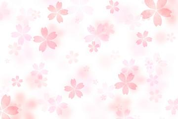 桜 花 春 白背景