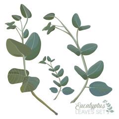 Eucalyptus Leaves Set Realistic Vector