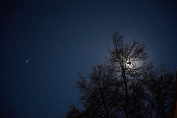 Silhouette of a possum sitting in tree in front of the moon on a starry night