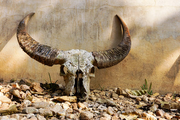 Antique medieval skull on outside wall