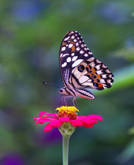 butterfly, insect, flower, nature, macro, summer, orange, garden, animal, wildlife, green, beauty, wings, wing, spring, plant, black, monarch, pink, fly, yellow, flowers, color, bug, feeding