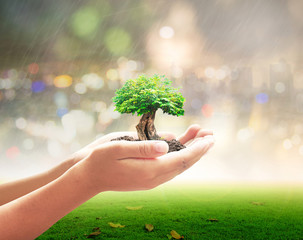 World environment day concept: Human hand holding big tree over beautiful nature background