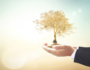 Investment concept: Businessman hands holding stacks of golden coins and big tree on blurred nature background.