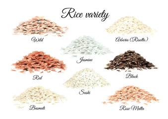 Rice variety. Watercolor hand drawn illustrations set isolated on white background