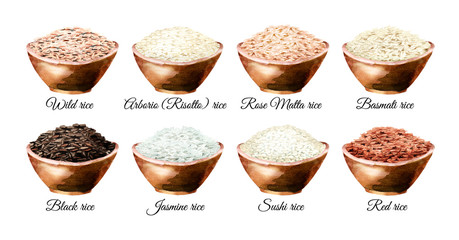 Rice variety. Watercolor hand drawn illustrations set, isolated on white background
