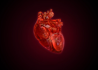Anatomical human heart isolated