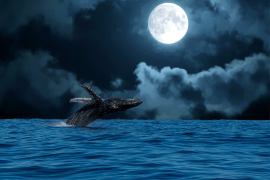humpback whale breaching at night on full moon background