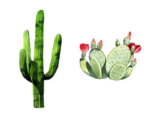 Watercolor cactus set illustration on white background