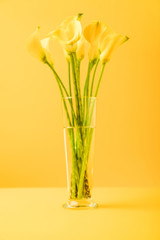 close-up view of beautiful yellow spring flowers in vase on yellow