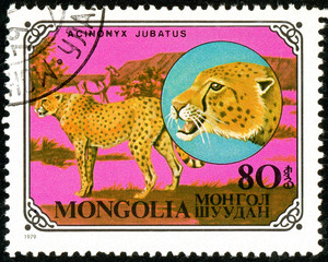 Ukraine - circa 2018: A postage stamp printed in Mongolia show Cheetah or Acinonyx jubatus. Series: Wild cats. Circa 1979