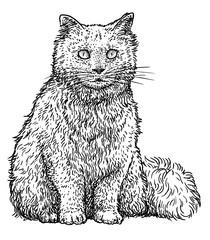 Persian cat illustration, drawing, engraving, ink, line art, vector