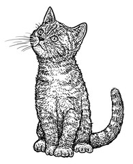 Tabby kitten illustration, drawing, engraving, ink, line art, vector