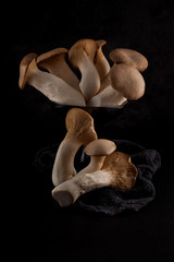 set of edible fresh mushrooms on black slate plate kitchen plate can be used as background