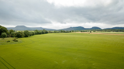 Young green wheat, Scottish Highlands; aerial view