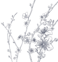 Cherry Blossom Peach Flowers Background Pattern