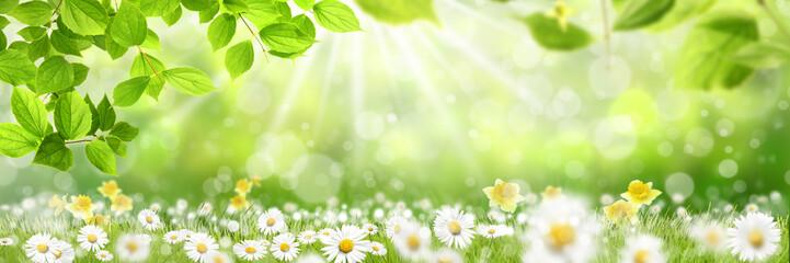 Frühling 426