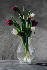 fresh purple and white tulips in glass jug on grey surface