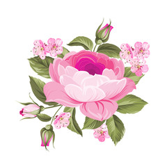 The Blooming Rose with couple of small sakura flowers. Botanical vector illustration. Awesome single flower.
