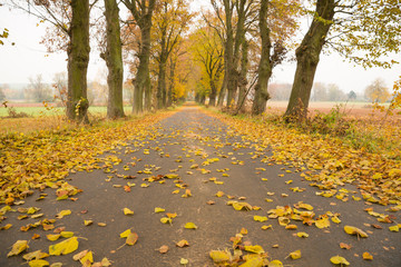 Allee im Herbst