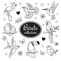 Birds icons collection. Vector collection of exotic birds outline icons, such as hummingbird, pink flamingo, parrot, toucan and swallow. Isolated on white.