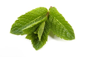 Aromatic fresh mint.