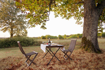 Autumn lunch with table and chairs under tree in vineyard