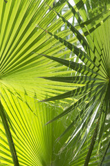 Graphic palm leaves