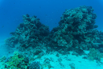 Red sea underwater coral reef with fishes