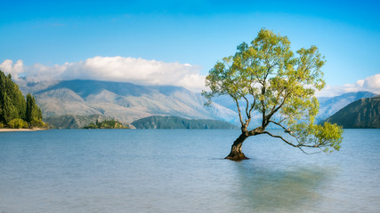 Wanaka Tree on a Serene Morning in New Zealand